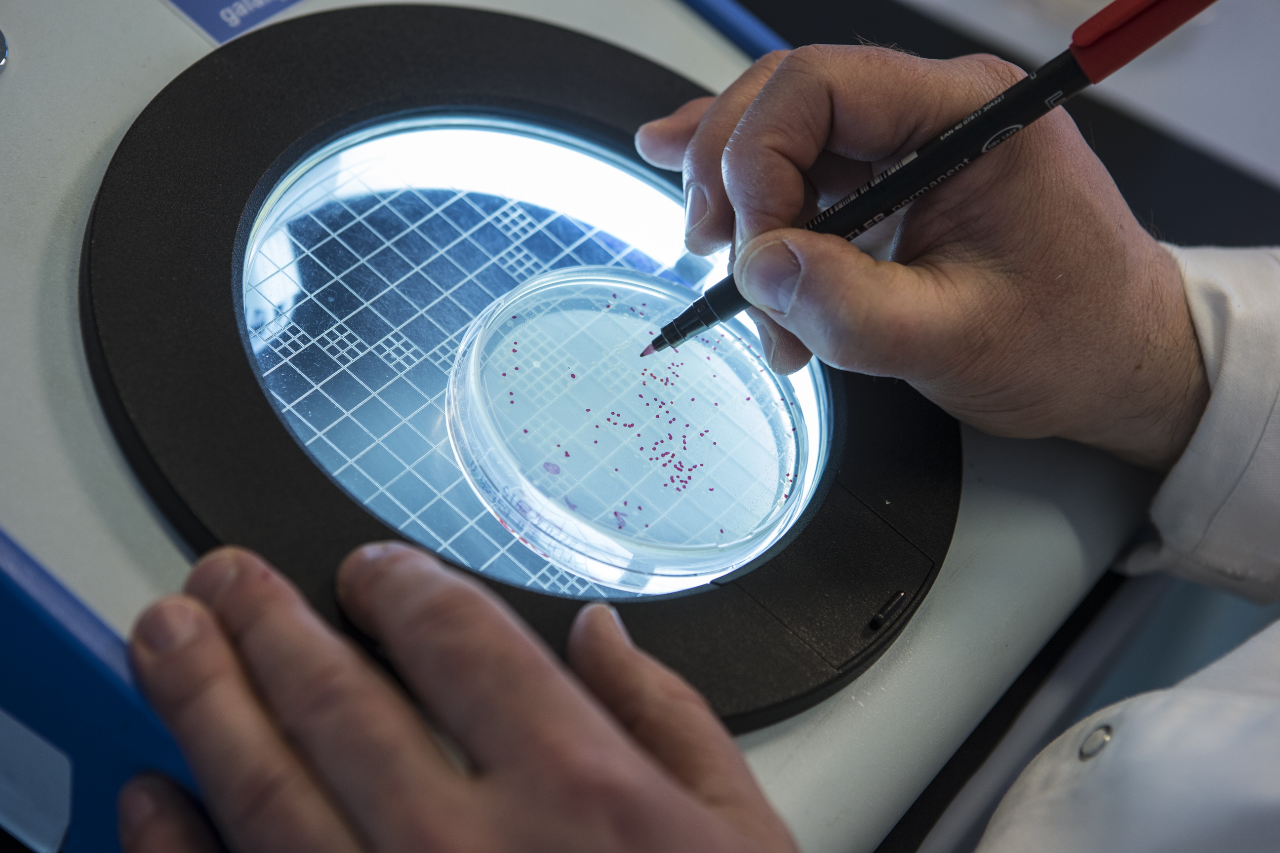 biochemical activities of microorganisms Methods in microbial ecology are used to evaluate presence,  and activities of microorganisms in  measurement of organic carbon by biochemical oxygen.
