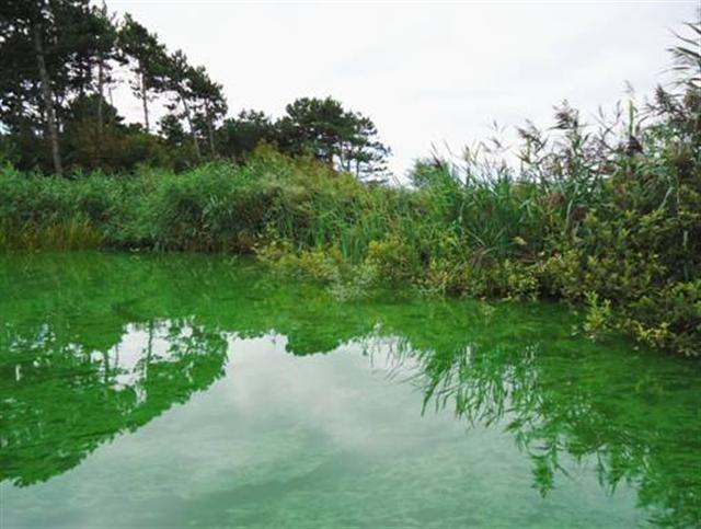 KWR uses the latest analysis techniques for the recognition and quantification of blue-green algal toxins, and has the ecological knowledge needed to prevent blue-green algal nuisance.