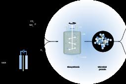 Nieuwe website Power-to-Protein: alles over het maken van eiwitten uit afvalwater