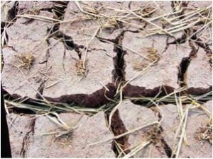 Crops fail in southern European countries due to drought.