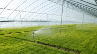 The importance of good water supply and water management