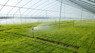 Re-USe of Treated effluent for agriculture – RUST