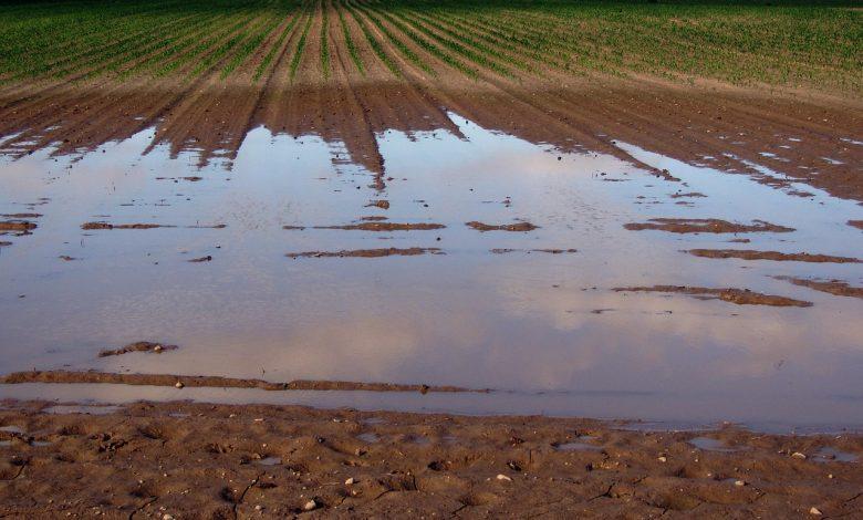 Extreme regenval als gevolg van klimaatverandering veroorzaakt wateroverlast in de landbouw.