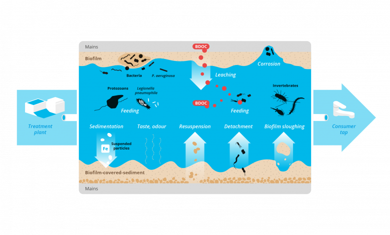 Overview of biological processes in drinking-water distribution system.