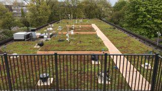 Blauwgroen daksysteem voor actieve koeling, stedelijke biodiversiteit en reductie van regenwaterafvoer