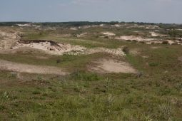 Workshop DPWE & OBN: Restoration of dune grasslands by reactivation of small scale eaolian dynamics
