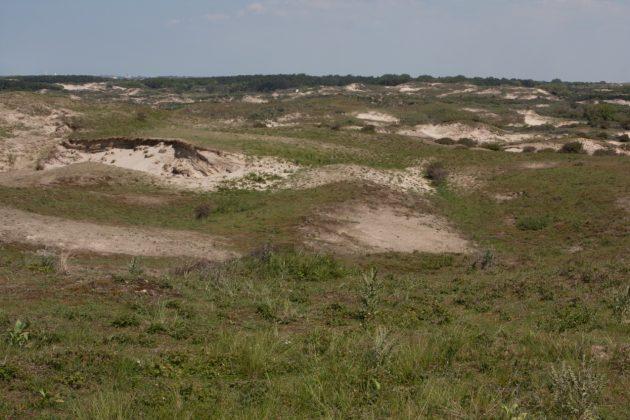 Workshop DPWE & OBN: Restoration of dune grasslands by reactivation of small scale eaolian dynamics