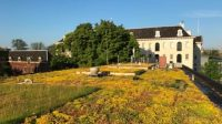 Innovative blue-green roof cools the city and prevents flooding