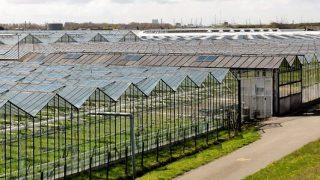 Verwijdering beschermingsmiddelen voor gewas uit lozingswater glastuinbouw