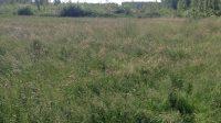 Effectief herstel van kruiden- en faunarijke graslanden in het droge zandlandschap