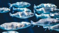 Detecting fish and bacteria through eDNA analysis