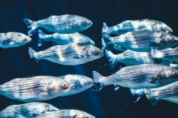 Detecting fish and bacteria through eDNA analysis