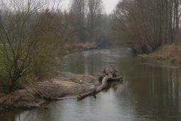 NL-Vispopulatiescan brengt de soortensamenstelling van vispopulaties in kaart