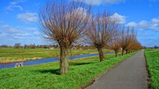Perspectief in de Polder