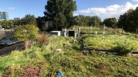Cool heads and dry feet thanks to blue-green roof