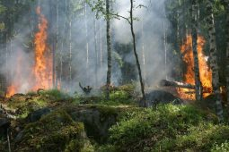 Betere bestrijding natuurbranden door inzicht droogte vegetatie