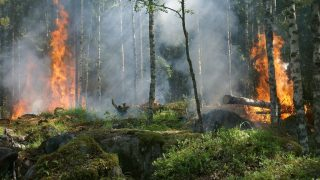 Water and Fire: hydrological predictions for wildfire management
