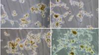 DNA-fingerprinting: krachtige monitoring tool in waterbeheer