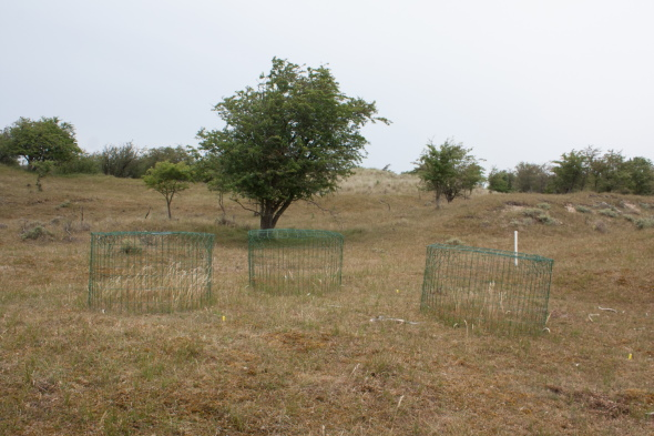 Measurement of productivity of enclosures in dune grassland.