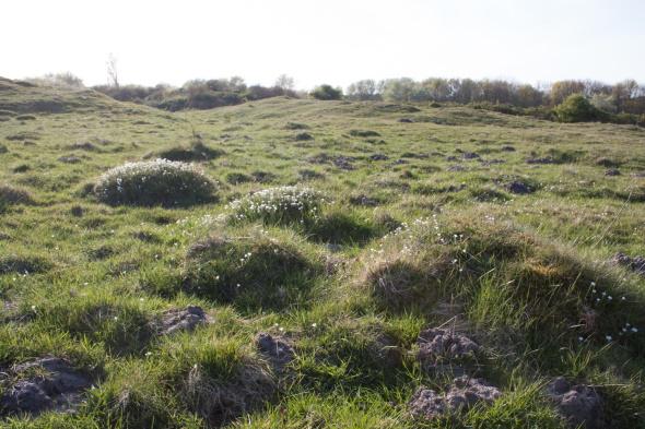 An old, species-rich dune grassland in the Middelduinen, a coastal dune area in the SW Netherlands.